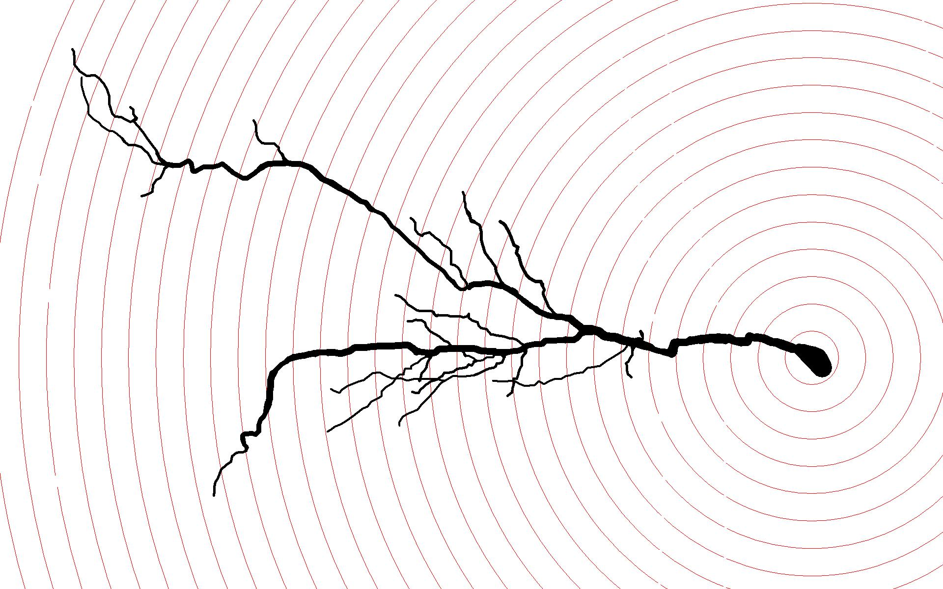 A digital reconstruction of a CA1 pyramidal cell from the ventral hippocampus, traced using Neurolucida with Sholl spheres at 20 micron intervals. Cells in this region featured greater dendritic length and branching versus controls.